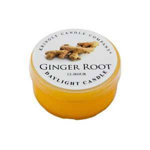 KRINGLE CANDLE  Świeczka Coloured Daylight GINGER ROOT